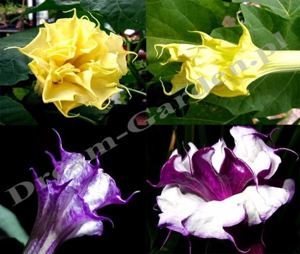 Kolorowe kwiaty bielunia