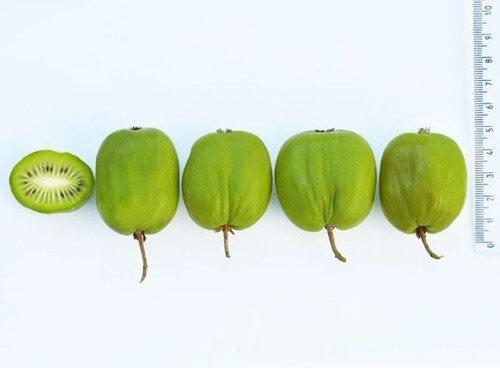 mini kiwi jak smakują owoce
