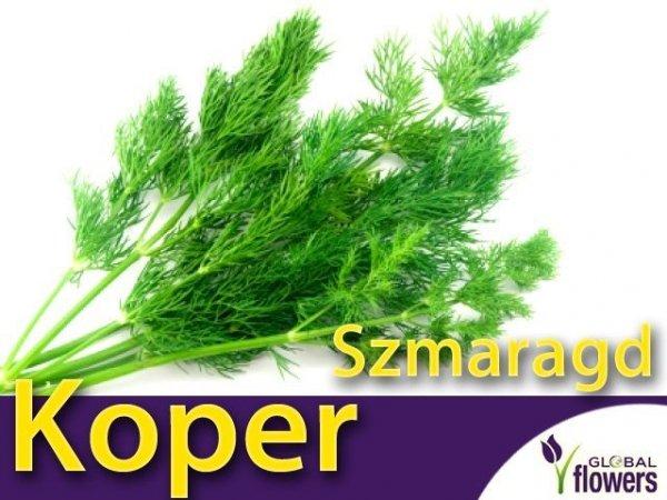Koper ogrodowy Szmaragd (Anethum graveolens) XXL 500g
