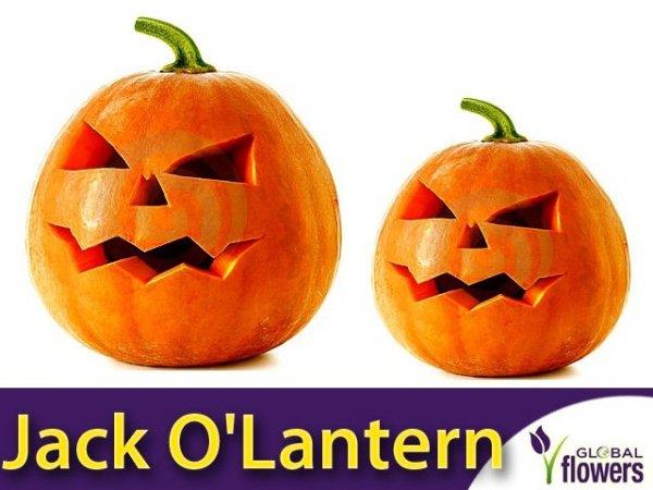Dynia ozdobna jadalna Jack O'Lantern (Cucurbita pepo)