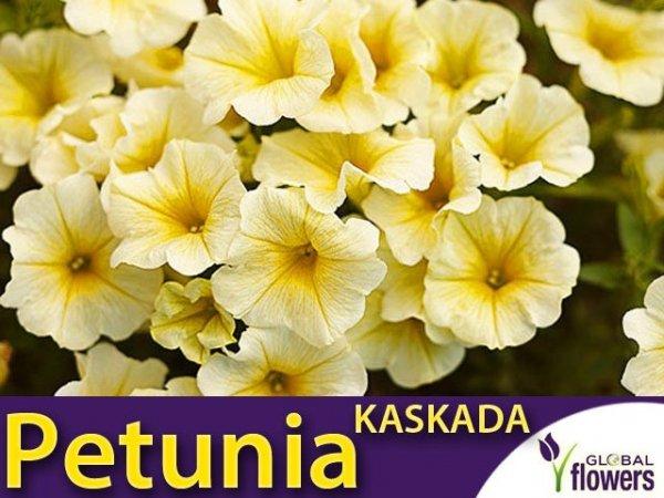 Petunia ogrodowa Kaskada żółta (Petunia x hybrida pendula)
