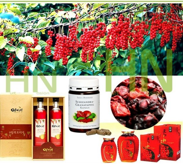 Cytryniec WU WEI ZI (Schisandra chinensis)