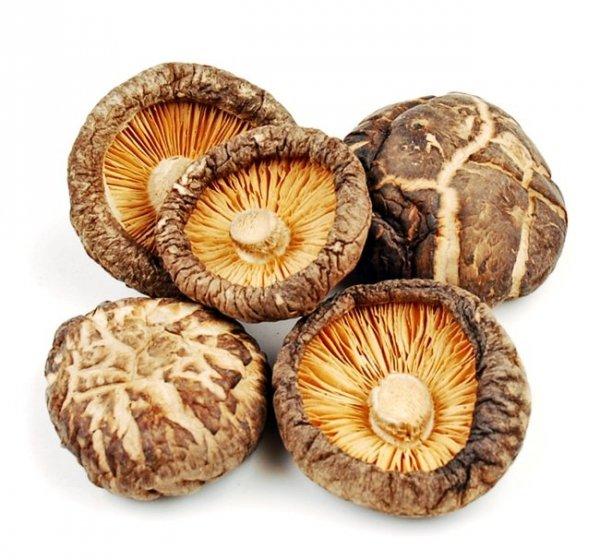 Shitake grzybnia na kołkach  – twardziak jadalny. Grzyb długowieczności !