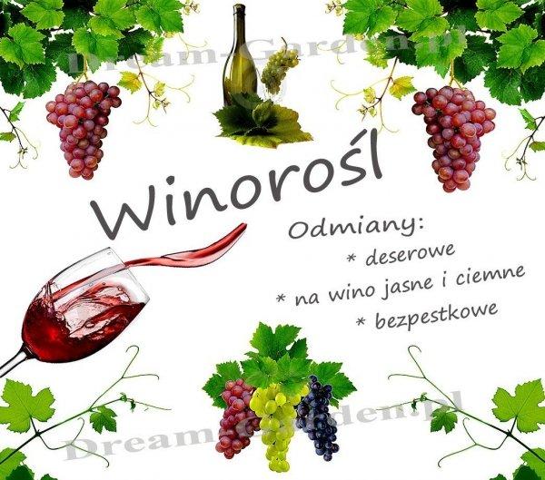 Sadzonki winogrona sklep