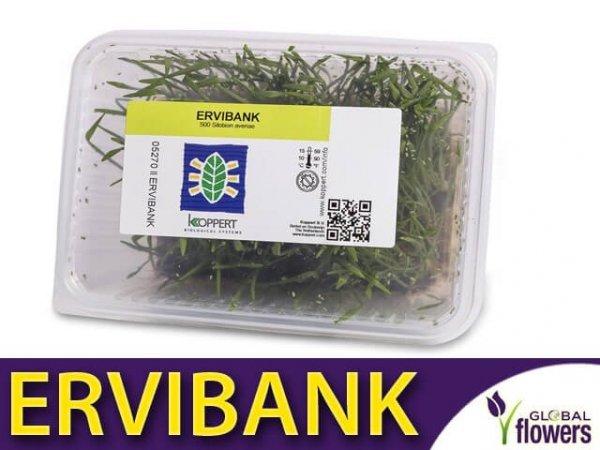ERVIBANK namnażanie pasożytniczych błonkówek
