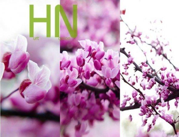 Cudowne kwiaty judaszowca