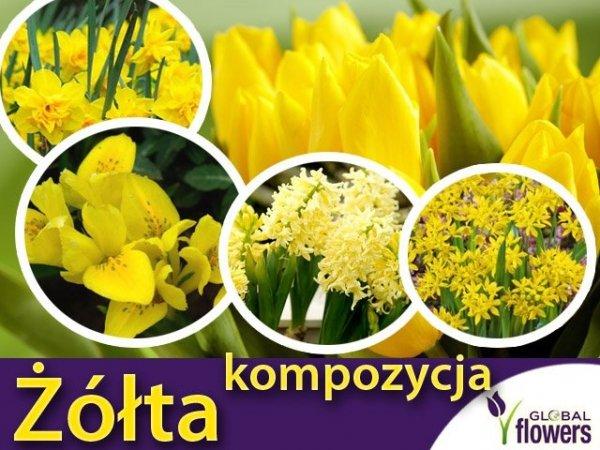 """Kolorowy ogród """"Harmonia barw"""" Kompozycja żółta CEBULKI"""