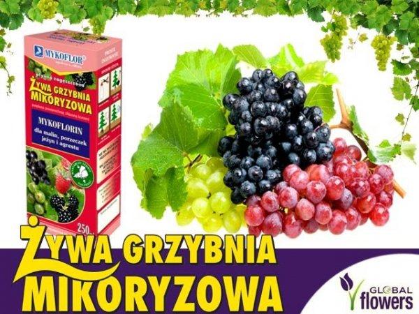 Mikoryza Grzybnia do winorośli 250ml