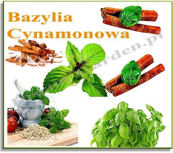 Bazylia o aromacie cynamonu