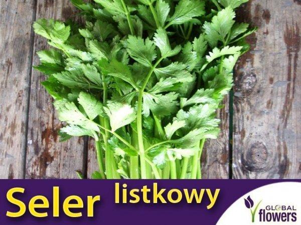 Seler Listkowy Green Cutting (Apium graveolens) 0,2 g