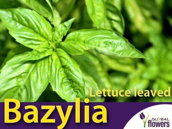Bazylia właściwa Lettuce leaved (Ocimum basilicum) 1g LUX