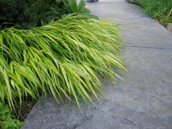 Trawy w doniczkach