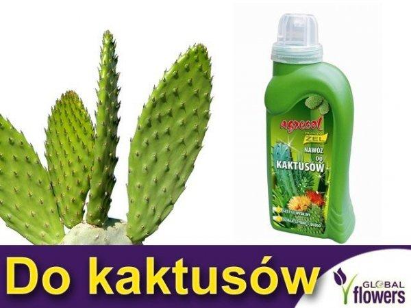 Agrecol Nawóz Mineral Żel do kaktusów 0,25l