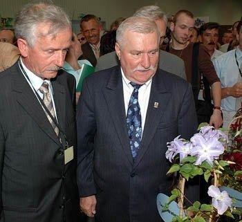 Clematis Powojnik 'Lech Wałęsa' uprawa