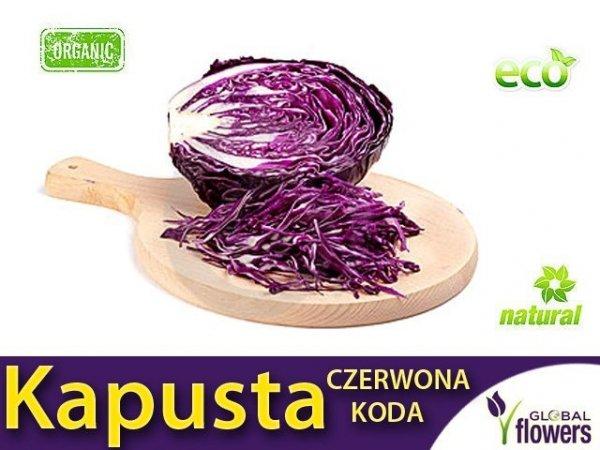 Kapusta głowiasta czerwona Koda (Brassica pleracea) 2g