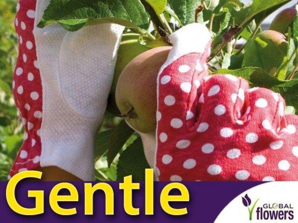Rękawice Ogrodnicze - Gentle - Wygodne do lekki prac.