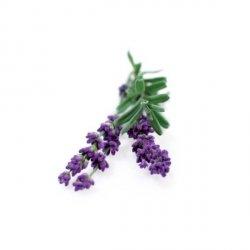 Kapsułki roślinne 3-pak Lawenda