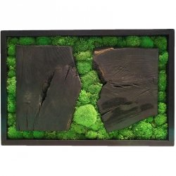 Obraz z mchu poduszkowego w ramie z palonego drewna
