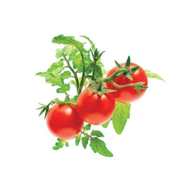 Kapsułki roślinne Pomidorki koktajlowe - zestaw 3 kapsułek