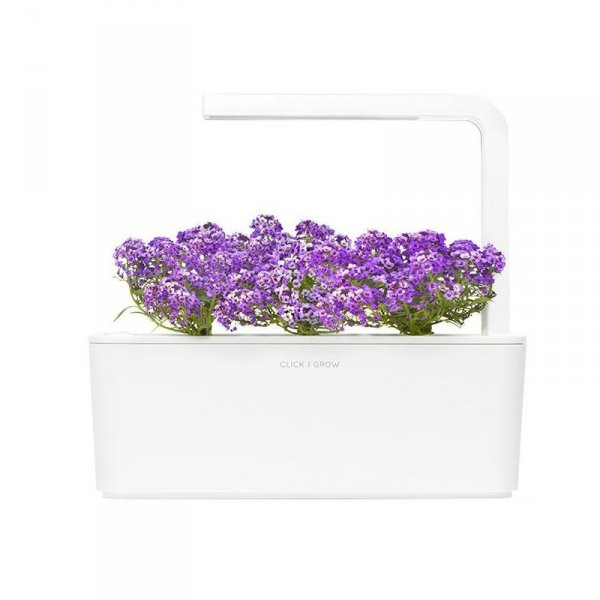 Kapsułki roślinne ze smagliczką nadmorską do doniczek Smart Garden