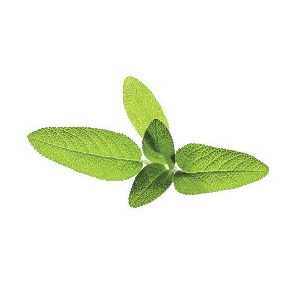 Szałwia lekarska to idealne zioło do wielu potraw