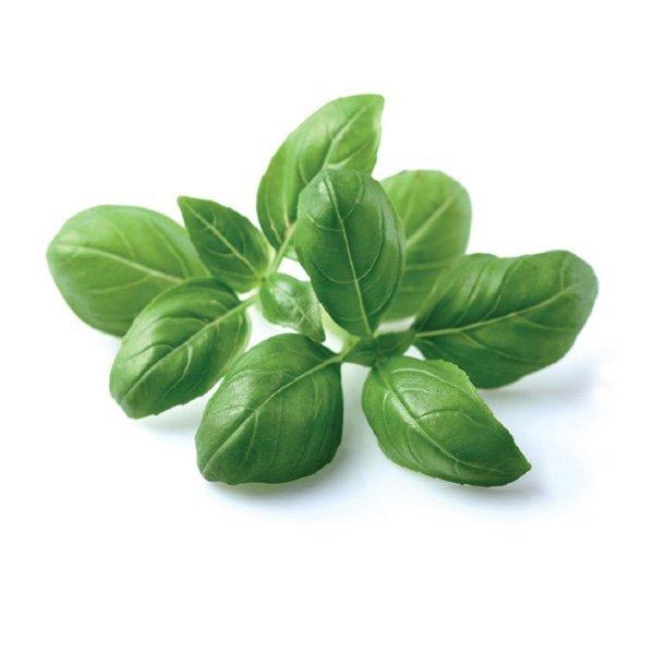 Click and Grow to idealne rozwiązanie na zioła w domowej kuchni jak pyszna bazylia
