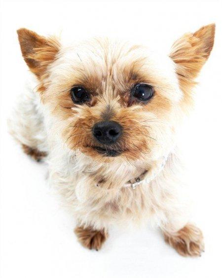 MC- Miska dla psa, 20 cm, biała PetWare