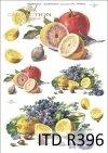 cytryna, cytryny, cytrynka, owoce, fiołki, kwiaty, kwiatki, R396