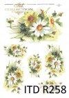 margaretki, polne kwiaty, kwiaty polne, białe kwiaty, żółte kwiaty, R258
