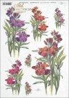 flower, flowers, R390