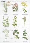 kitchen, spices, herbs, herbs, herbarium, mint, nettle, rosemary, R401