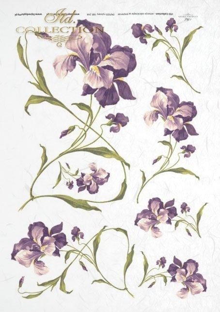 flowers, irises, with irises flowers, purple irises, long stems, natural size