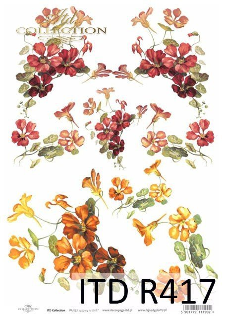 kwiat, kwiaty, kwiatek, kwiatki, listki, liście, płatki kwiatów, nasturcja, nasturcje, R417