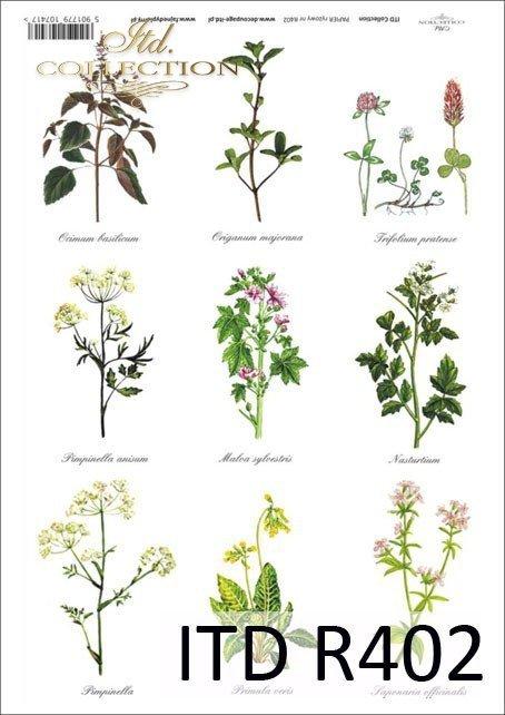 uchnia, przyprawy, zioła, ziółka, zielnik, bazylia, oregano, majeranek, koniczyna, ślaz dziki, R402