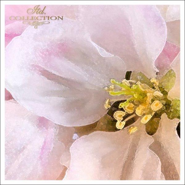 Приглашение на Святое Крещение 1746 7 яблоня