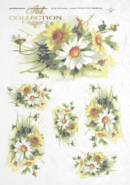 margarette, various wild flowers, white and yellow