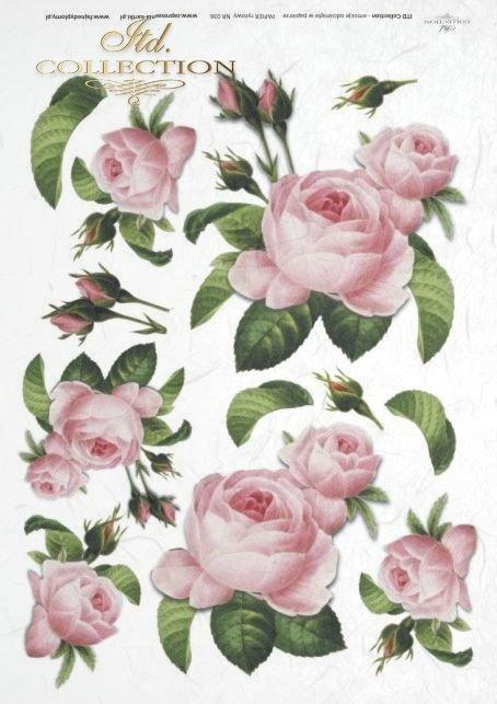 roża, róże, Rose, roses, buds, leaves, bouquets, flowers, flower, R036
