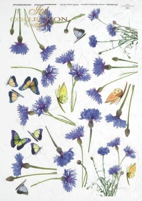 chabry, flower, flowers, cornflowe, cornflowers, butterfly, butterflies, wildflowers, meadow, R043