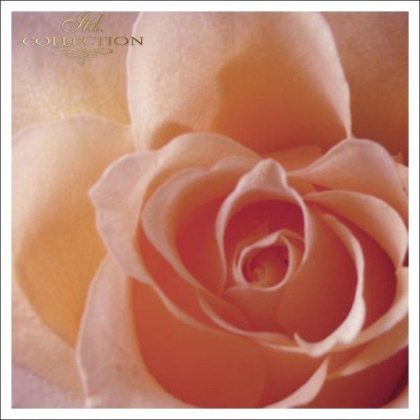 Zaproszenia na chrzest  1731 010 róża