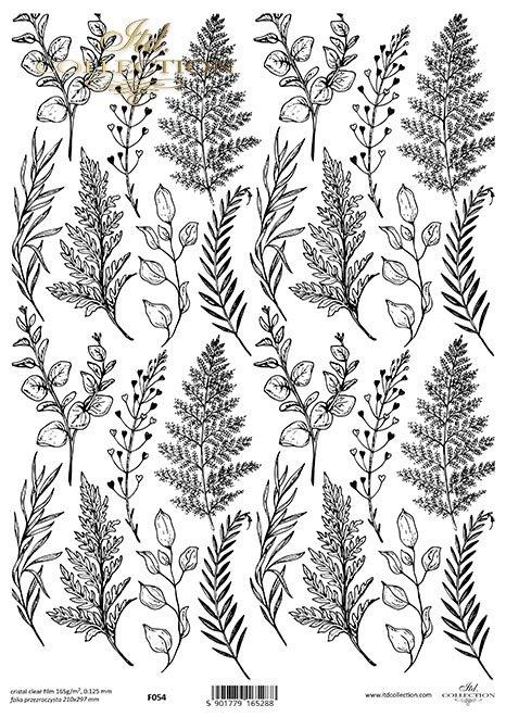 paprocie, liście*ferns, leaves*Farne, Blätter*helechos, hojas