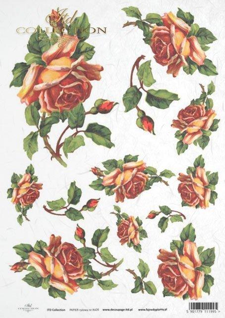 rose, roses, flower, flowers, bouquet, bouquets, R426