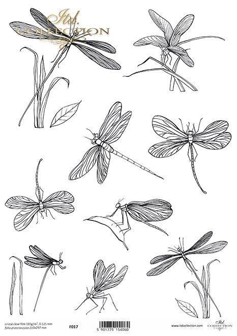 owady, ważki