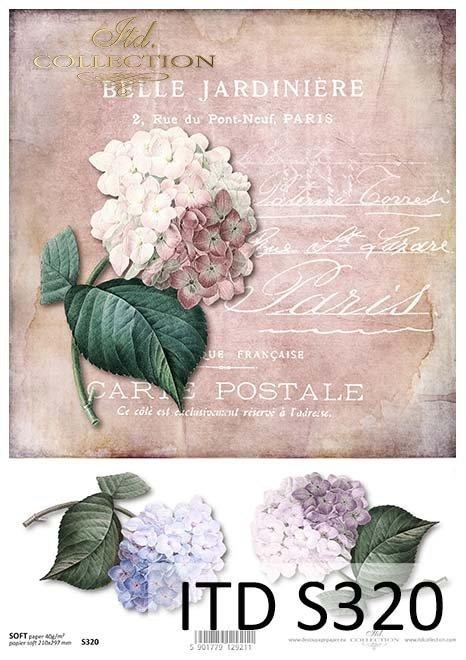 papier decoupage Hortensja*paper decoupage Hydrangea