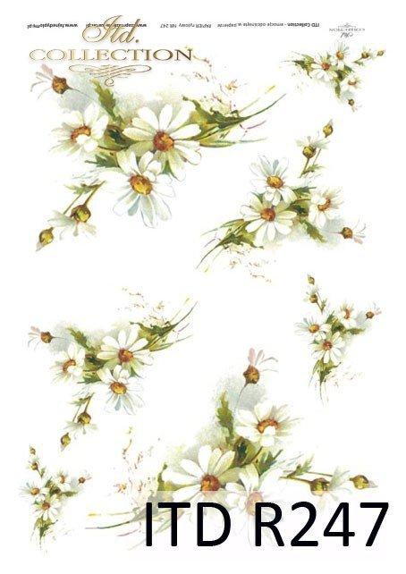 kwiaty, kwiatki, nagietki, nagietek, kwiaty nagietków, R247