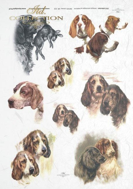 retro and vintage, hunting, hunting dogs, dog, dog muzzles, dog heads