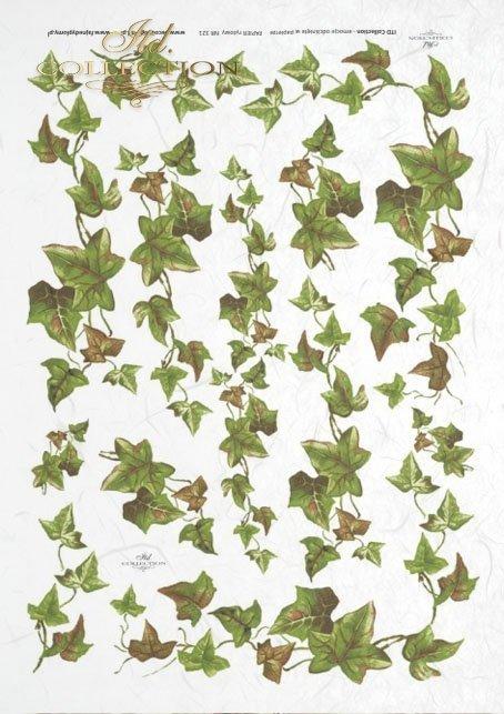 ivy, common ivy, leaves, shrubs, plants, R321
