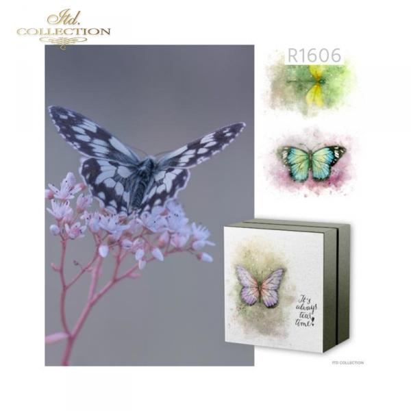 Akwarele, kolorowe motyle, ważka, owady, lato*Watercolors, colorful butterflies, dragonfly, insects, summer