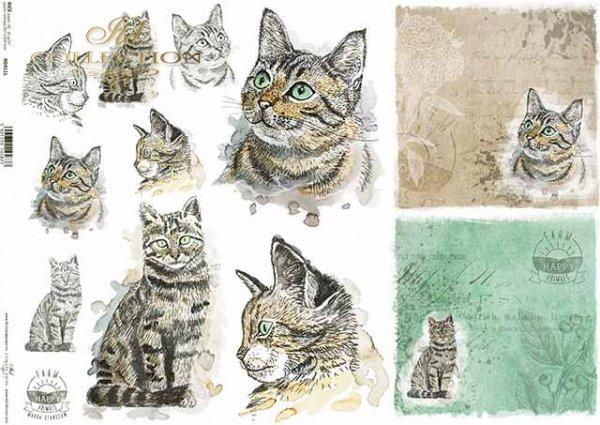 R0411L * kot, koty, głowy kotów, napisy 'happy farm'