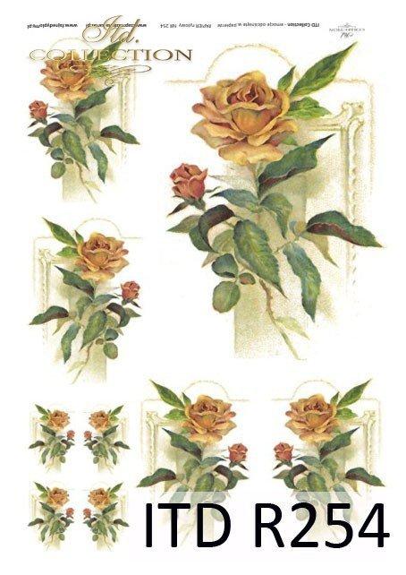 morelowa róża, róże, róża, kwiaty, żółte kwiaty, R254