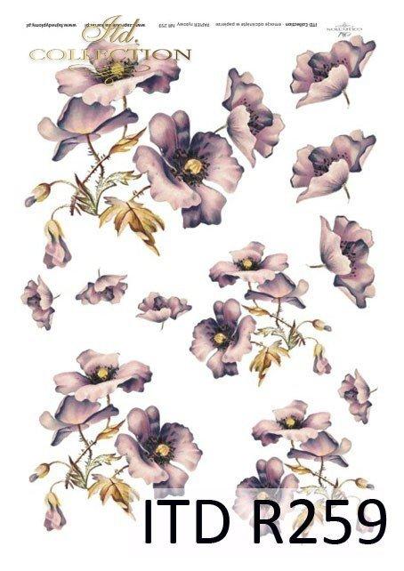 kwiaty, maki, mak, polne kwiaty, polne maki, fioletowe maki, maki ogrodowe, makowe kwiaty, R259